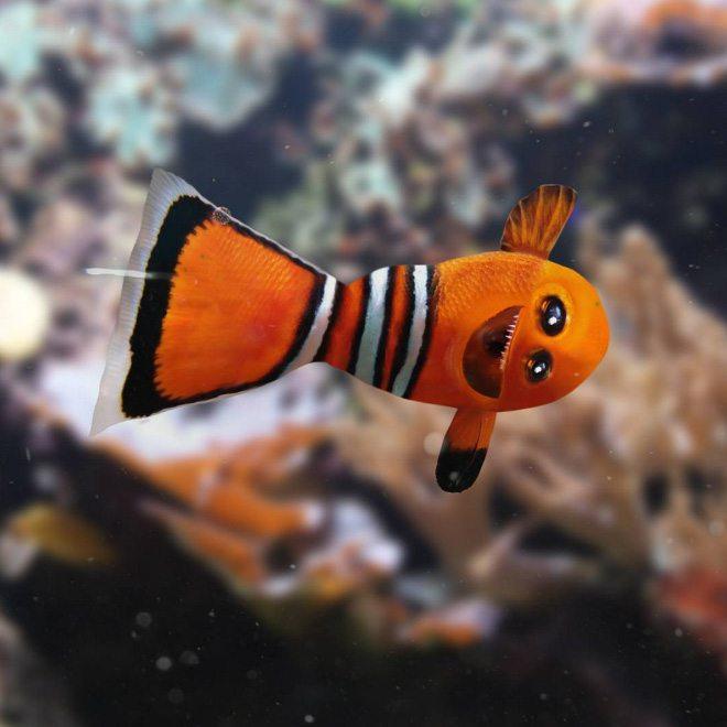 ציור של דג על ידי ילד בן 6